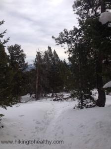 Bergen Peak Trail