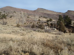 View at the start of Hall Ranch with a little sun