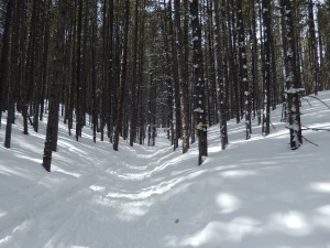 Trail Conditions on Engleman
