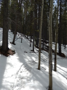The last mile on Mason Creek went down...on ice and snow