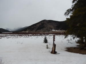 meadow  of snowshoe