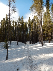 Trail Conditions in the beginning