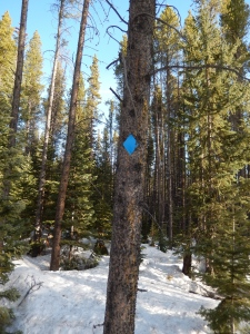 These trail markers make following the path in the snow easy. Very well marked